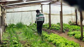 Bitcoins: Liberating Organic Farmers