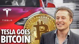Bitcoin & Tesla   Tesla – Bitcoins Biggest Supporter   Elon Musk   Experts Interviews   Bloomberg